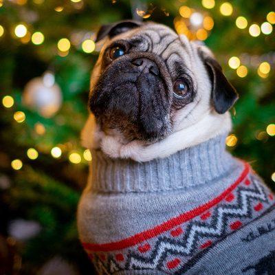 pet-holiday-gifts-kentucky